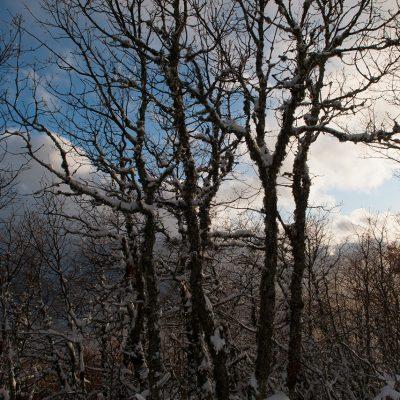 Cocina-Acebo-Nieve